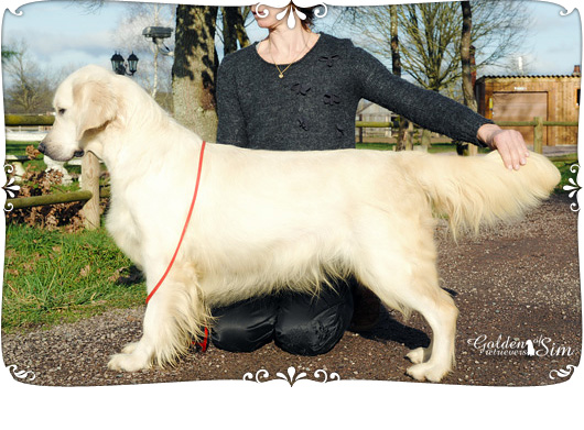 Good girl pedigree 1