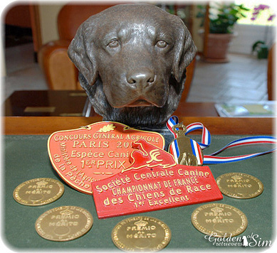 diplomes-elevage-golden-retrievers-of-sim