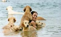 la-baignade-les-chiots-golden-retriever-of-sim.jpg